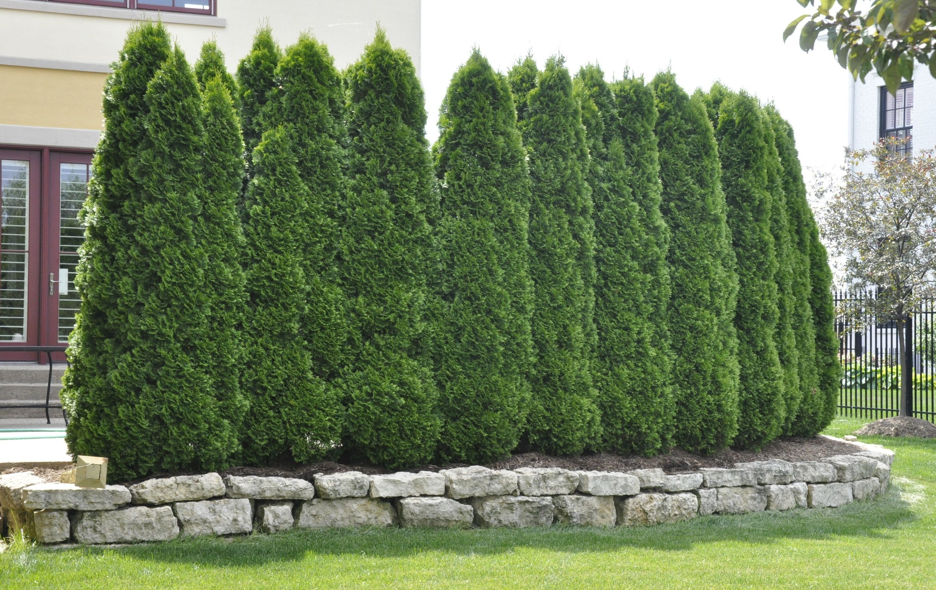 A Row of Privacy Trees
