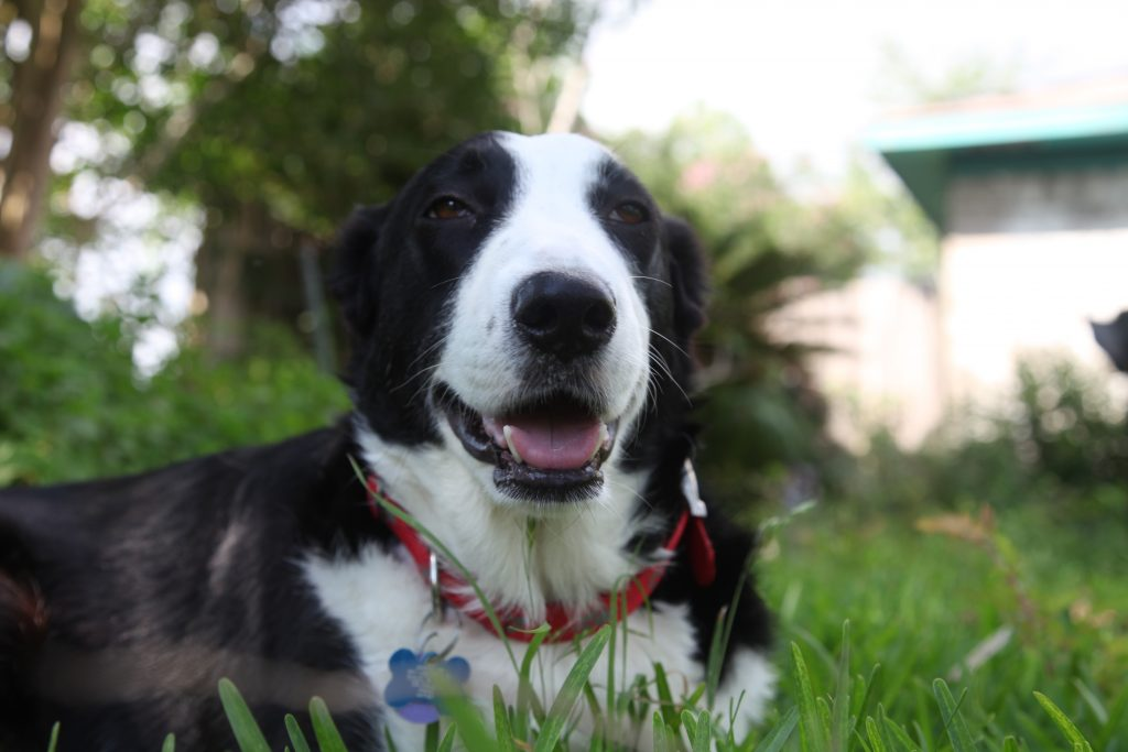 Maggie the Border Collie