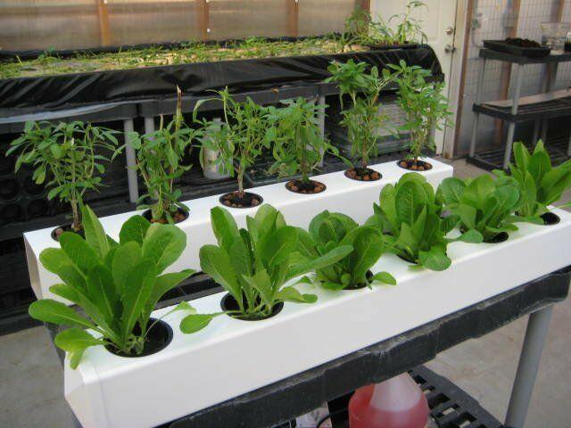 Indoor hydroponic gardening