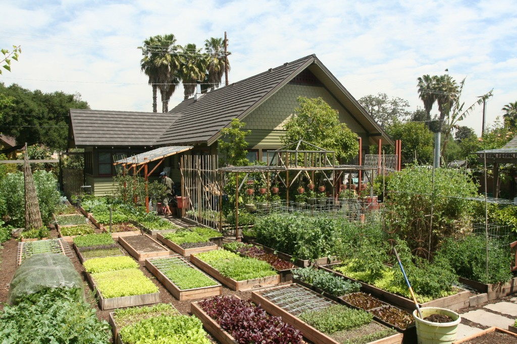 An urban homestead with vegetable garden.