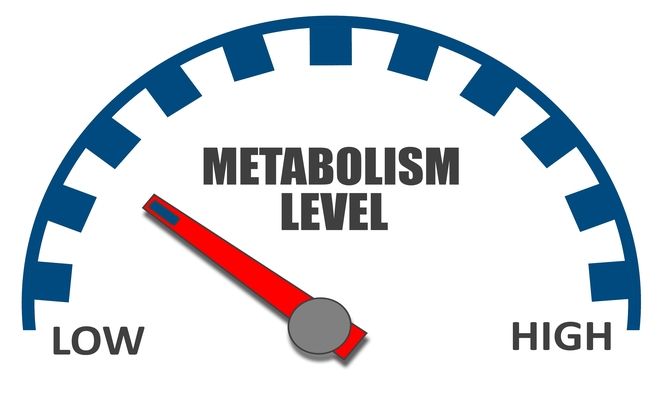 Where is your metabolism meter pinned?
