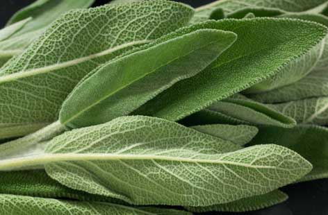 The many health benefits of sage