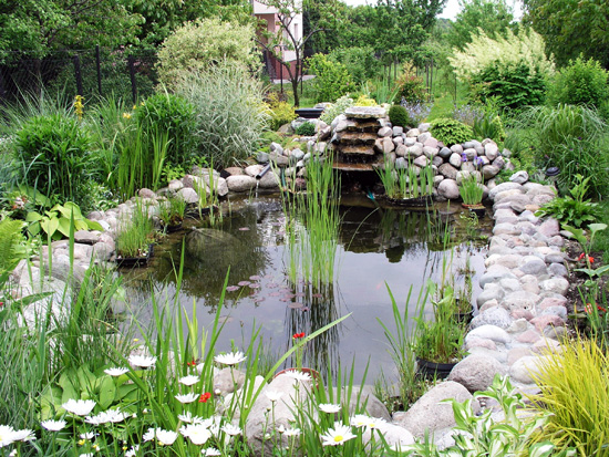 A backyard pond with waterfall, photo courtesy Nowis