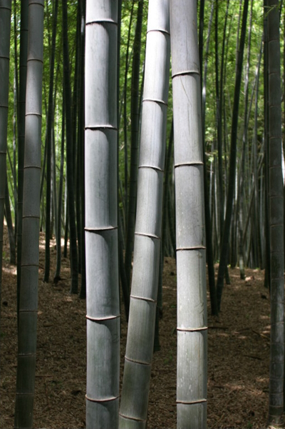 A bamboo forest is sustainable
