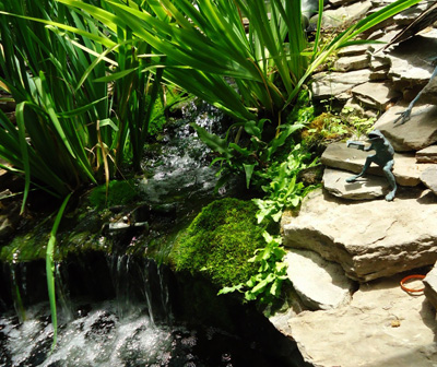 A waterfall and garden pond; photo courtesy Tomwsulcer